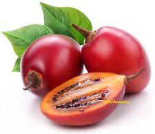 50 Graines de Tamarillo ,arbre à tomates Cyphomandra Solanum betaceum tree seeds