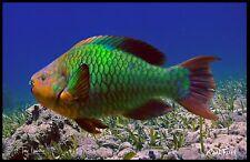 "Realfish H20 Series Parrot Fish "" Life "" Fish Mat Floor Mat Doormat 24x36"