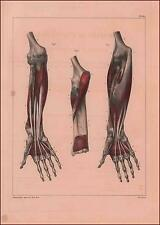 ANATOMY Color Lithograph, Scarce by Jean Baptiste Bourgery, Hands, Arms 1832