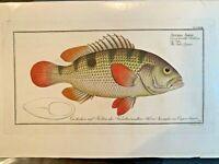 1st EDITION BLOCH OBLONG FOLIO H/C RARE FISH - THE JOHNS GRUNT - #318