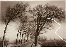 23x15cm Vintage Orig Foto Experimentell Allee Herbstlandschaft Bäume photo