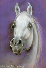 NEW * JOB LOT * 10 x A5 STUNNING ARAB HORSE POSTCARD * PRINT * MOONGAZER