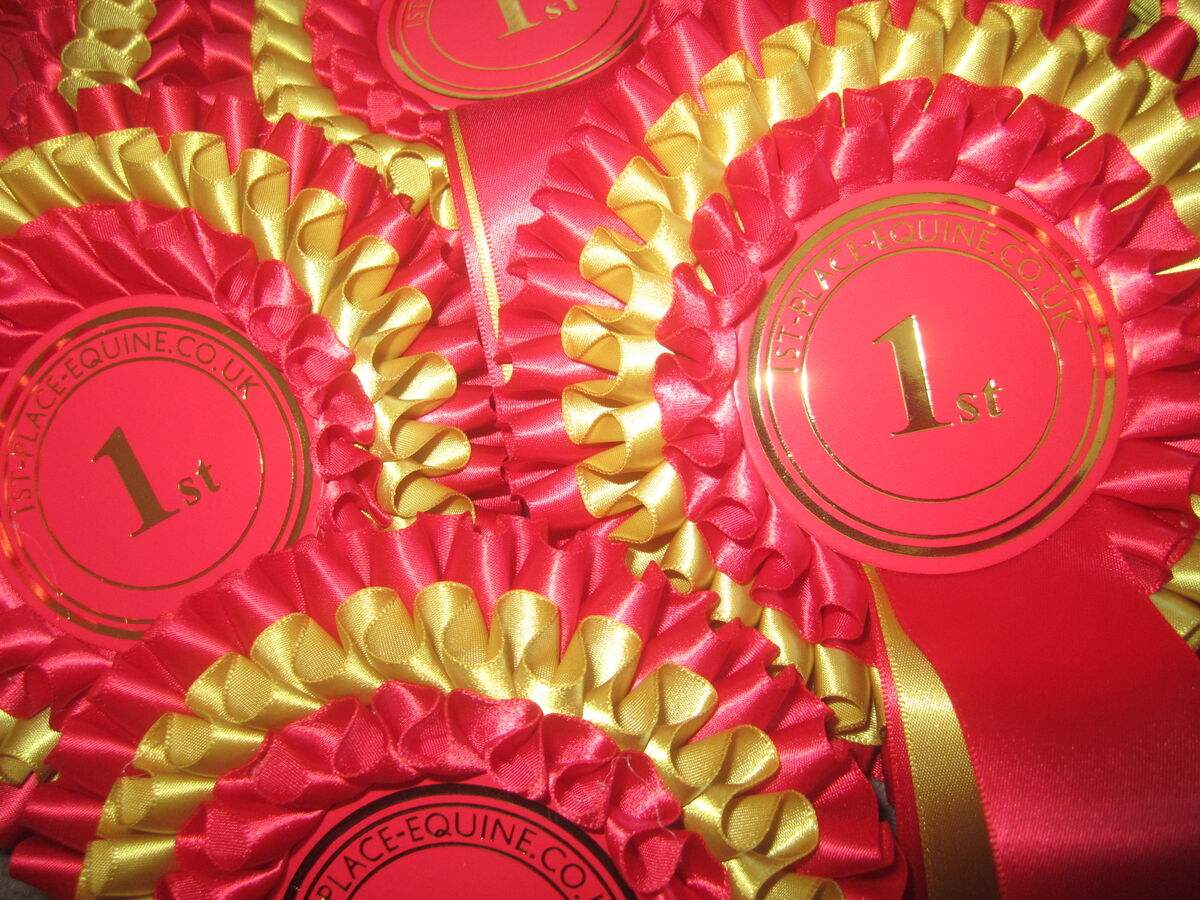 1st-Place-Equine