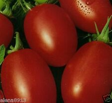 "Tomato seeds ""Rocket"" (10 seeds) Lot of 1 pcs"