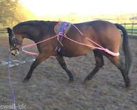 NEW Horse Lunging Training Aid Pessoa based PINK one size fits all F/C/P/MINI