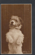 Animals Postcard - Dogs - Dog Begging    RS10706