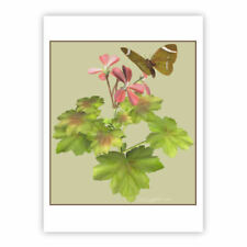 © ART  butterfly Geranium Original Insect Flower Artist illustration Print by Di