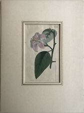 Hand Colored Copperplate Francis Sansom - Sydenham Edwards - Lily Lily