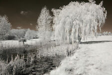 Nikon D50 infrared converted Camera 690nm standard Infrared Converted Camera IR.