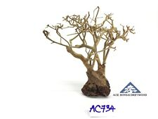 Aquarium Bonsai Driftwood A+++ Moss Tree Shrimp Fish Aquascape -Size Mini- AC734
