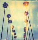 """Stefanie Schneider Edition 'Palm Trees at Wilcox"""", 21/100, 78x76cm, Lambda Print"""
