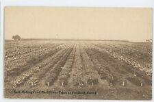 Kale Cabbage Rows at FORDHOOK FARMS Doylestown PA Vintage Pennsylvania Postcard