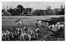 Netherlands Laren (Gooi) Hertenkamp, deer, doe, Echte fotografie