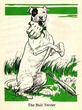 1940 Antique Bull Terrier Print Vintage Diana Thorne Bull Terrier Dog Art 4221a