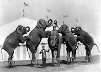 Antique Photo... Clyde Betty & Cole Bros. Circus Elephants ... Photo Print 5x7