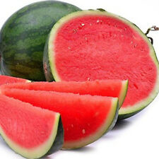 50 seedless watermelon seeds watermelon seeds sweet juice tasty growing Set  w/