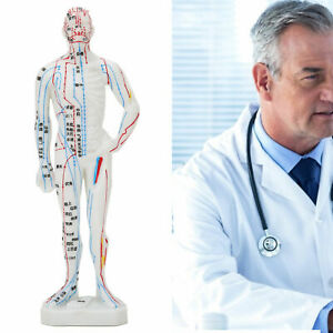 """10"""" Human Acupuncture Model Herbalist Doctor Figurine Body Study Teaching Statue"""