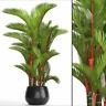 Cyrtostachys renda (C. lakka) Lipstick Palm - FRESH HARVEST 2019 - 10 seeds