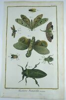 1780 Martinet - MOTHS - hand coloured 38 cm engraving