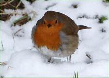Wildlife Hospital Charity Xmas Cards - Snowy Robin – pack of 10