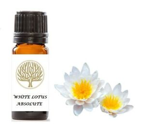 100% Pure White Lotus Absolute Oil