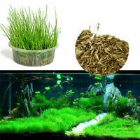 Aquarium Aquarium Pflanzen Samen Aquatic Wasser Gras UNS Qualität Top Neue B1D6