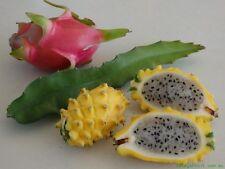 RAINBOW Dragon Fruit Starter Kit! Hyrbid Edible Blue Blooms! PLANT STORE CLOSING