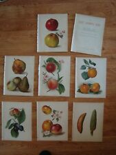 Fruit Grower's Guide Division 2  JOHN WRIGHT  7 Colour Plates Prints MAY RIVERS