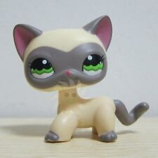 Hasbro Littlest Pet Shop Collection LPS #1116 Cream Gray Masked Short Hair Cat A