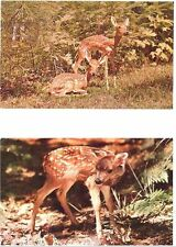 Two Baby Deer Cards - TWIN FAWNS and One By HIMSELF