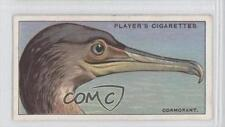 1929 Player's Curious Beaks Tobacco Base #6 Cormorant Non-Sports Card 1s8