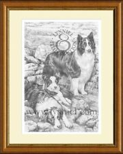 Border Collies Giclee Perro Print By Lynn Paterson