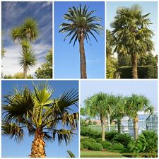 Palm Seed Collection - 5 Packets. Our most popular & hardiest palms. Save 20% !
