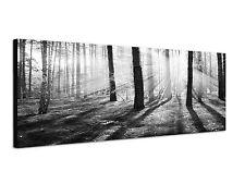 150x50cm Panoramabild Schwarz Weiss - sonniger Morgen im Wald Sonnenstrahlen