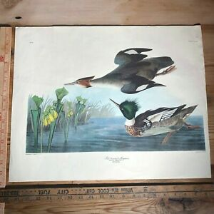 Vintage JJ Audubon Bird Print 81 Plate CCCCI Waterfowl Ducks 16x20 by Havell