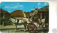 Méjico - Caballo And Buggy At The Park Of The Americas - Merida, Yucatan