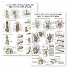 2 Pack - Anatomy and Injuries of The Hand & Wrist + Anatomy and Injuries of T...