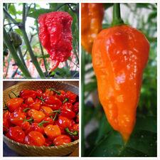 100Pcs Combo Seeds Ghost Pepper Carolina Reaper Trinidad Moruga Scorpion Chili