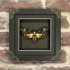 Deaths Head Moth in Baroque Style Box Frame