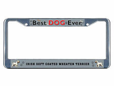 Irish Soft Coated Wheaten Terrier Dog Best Dog Ever Metal License Plate Frame