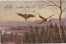 UNKNOWN WILD BIRDS in Flight Artist Signed Vintage German Art PC Annaburg 1903