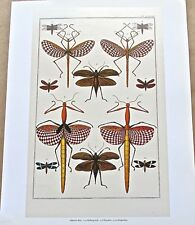 Natural History-Tropical Insects 15x12 Offset Lithograph Unsigned