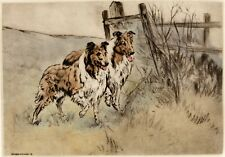 More details for rough collie lassie sheepdog dog limited edition print engraving henry wilkinson
