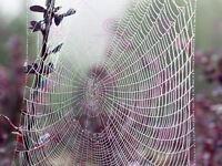 Photograph Cool Dew Drop Spider Web Nature Picture Canvas Art Print