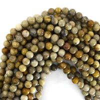 "Fossil Coral Round Beads Gemstone 15.5"" Strand 4mm 6mm 8mm 10mm 12mm"