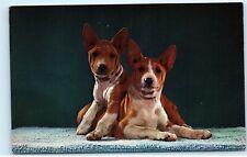 African Basenji Dogs Vintage Postcard D27