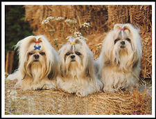 SHIH TZU THREE LITTLE DOGS LOVELY DOG PRINT POSTER