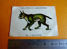 CHROMO 1939 CASINO LES ANIMAUX CARNASSIERS N°84 LE LYNX