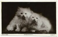Antique Photo Postcard Adorable White Kittens Cats Sweethearts Gray London