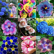 Various Hydrangea Orchid Ideal Garden Potted Seeds Rare Flower Plant Decor